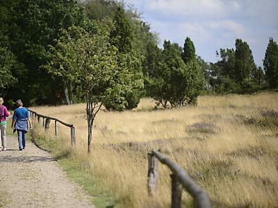 Zwischen Heide und Wacholder