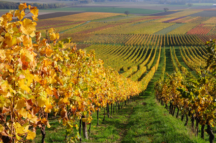 Reise Tipp: Herbsturlaub im Nahetal
