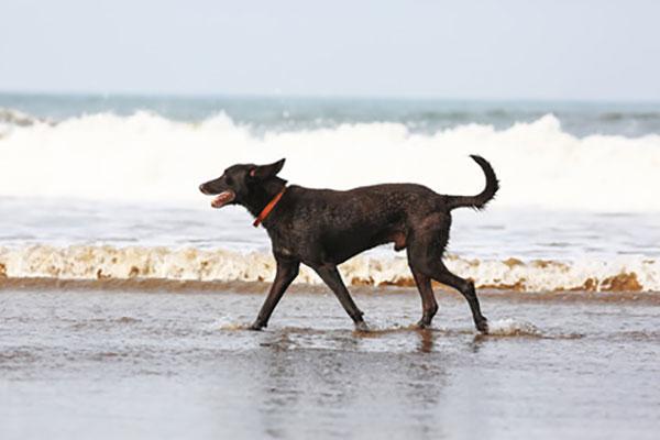 Was Sie für den Urlaub mit Hund beachten sollten